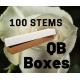 Vendela 100 stems QB box