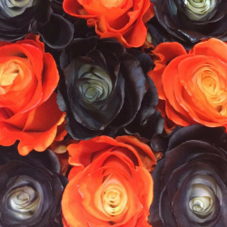 Black & Orange Pack Tinted Roses 100 stems QB box