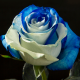 Blue & White 100 stems QB box