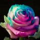 Pink, blue, light blue & white 100 stems QB box