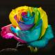 Rainbow 100 stems QB box