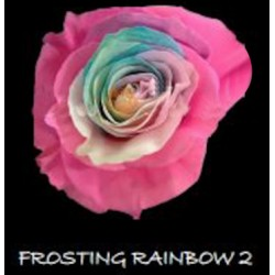 Frosting Rainbow 2, 100 Roses